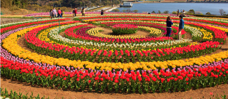 Tulip Flower Festival of Kashmir