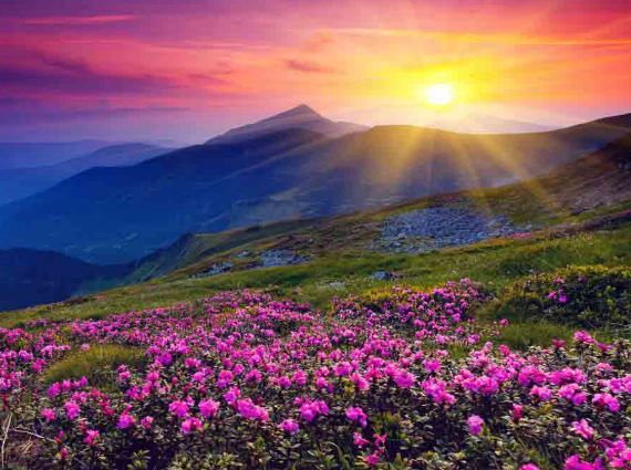 Tour to Valley of Flowers