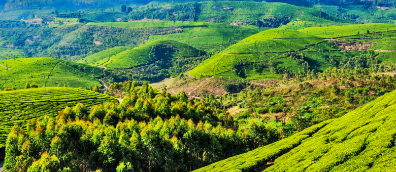 Coonoor, a hill station in Tamil Nadu