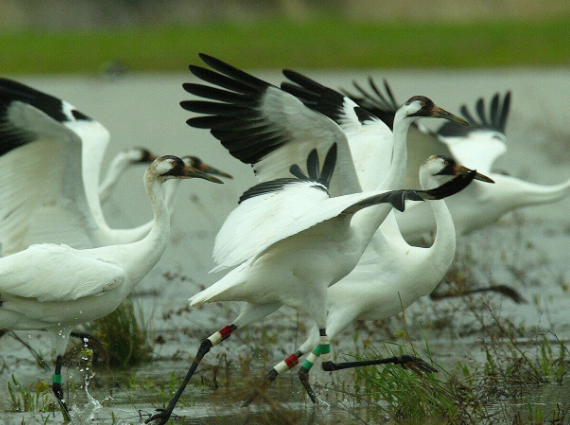15 Enticing Bird Sanctuaries in India