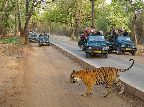 10 Best Tiger Safari in India
