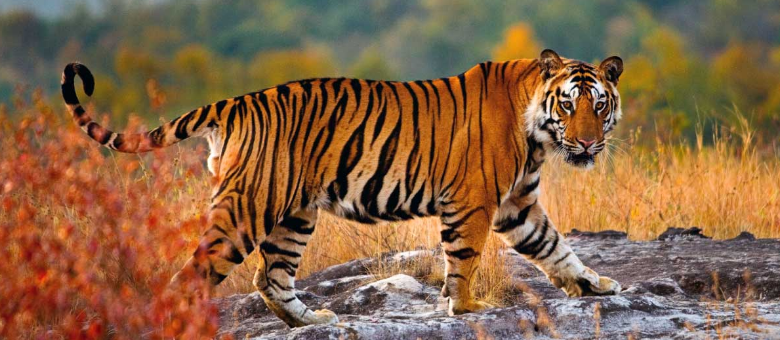 Where to go in India for Wildlife Lovers