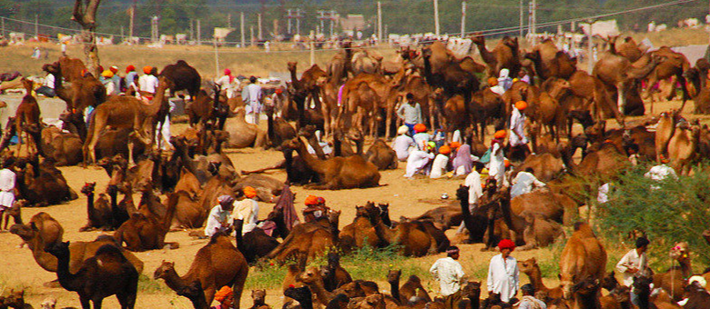 Pushkar Camel Fair 2020