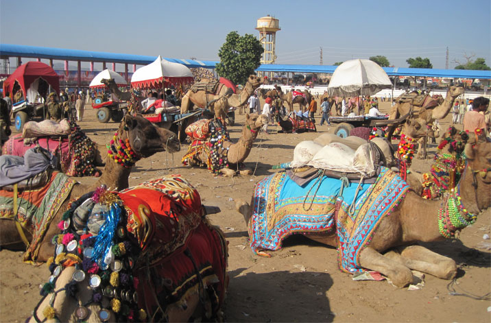 Biggest & Largest Cattle Fair in India