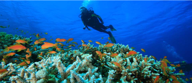 Top Scuba Diving Places in India