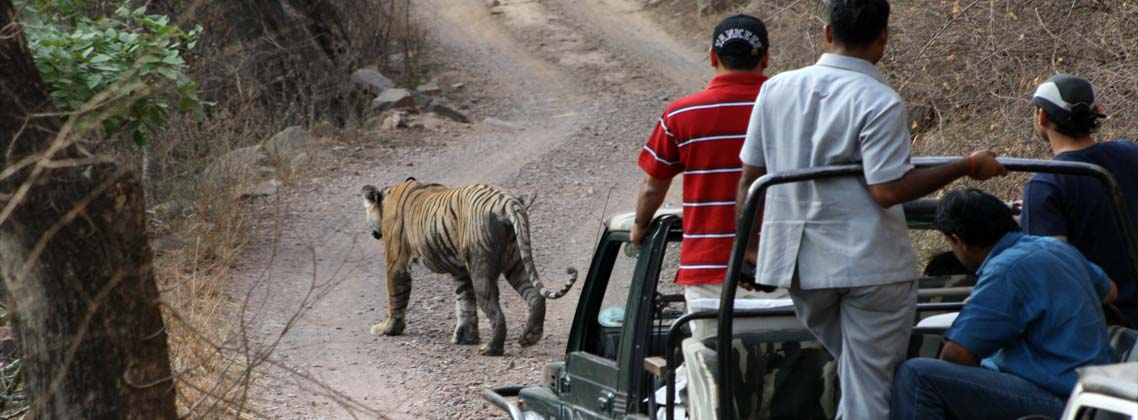 Famous and Exciting Wildlife Safaris in India