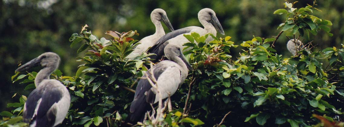 Bird Watching Tour India