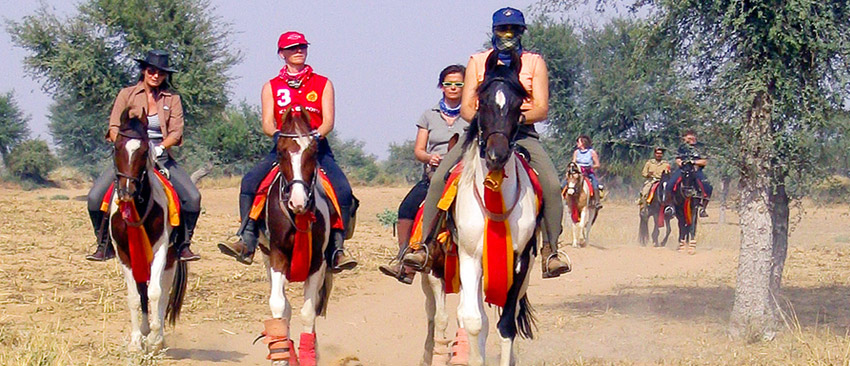 The Royal Horse Safari India