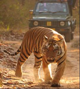 Wildlife Tour of India