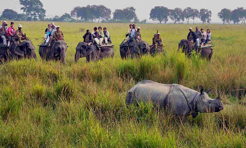 Kaziranga National Park, Assam (designated in 1985)