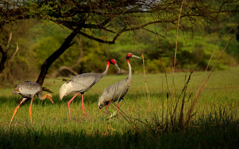 Keoladeo National Park (designated in 1985)